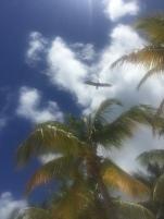 Beautiful skies and wildlife.